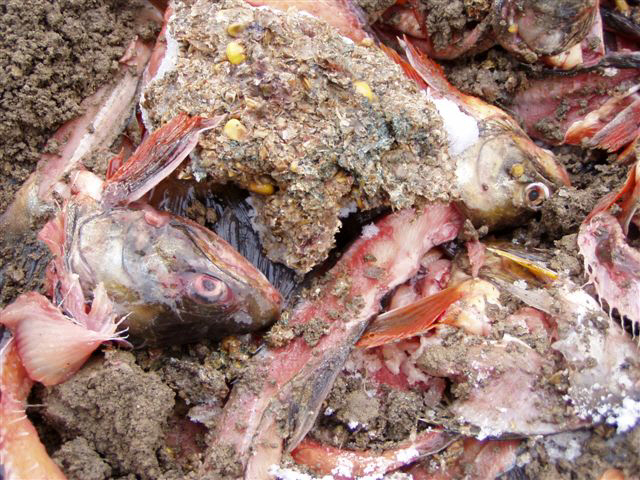 Streng Verboten Wird Trotzdem Gemacht Fisch Am